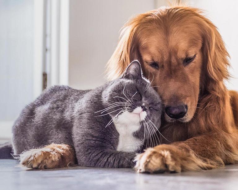 Companion Animal Knowledge Base